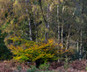 Ashridge in Autumn #2