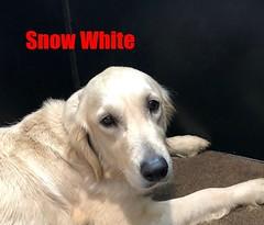 snow-white_49570595313_o