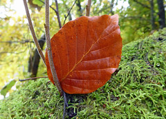 Photo of Autumn gold