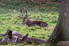 Studley Royal Deer Park