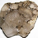Halitite (Salina Group, Silurian; Detroit Salt Company mine, Detroit, Michigan, USA) 1