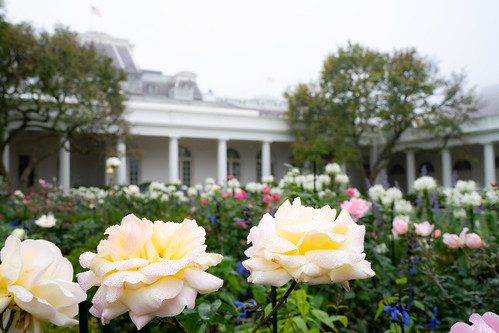 White House Flowers by The White House, on Flickr