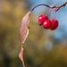 Northern Plains Botanic Garden Society, Fargo 10/12/20