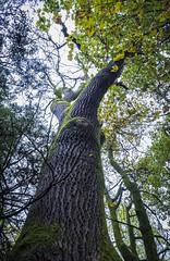 Photo of Tree, Marr Hall Woods, Lochwinnoch, Renfrewshire, Scotland, UK