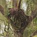 Bald Eagle Nest 20201022