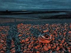 Photo of Thursday evening beach clean