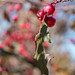 Berries, Northern Plains Botanic Garden Society, Fargo 10/12/20