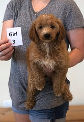 Bailey Girl 3 pic 3 10-23