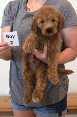 Bailey Boy 2 pic 3 10-23