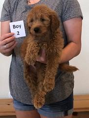 Bailey Boy 2 pic 4 10-23
