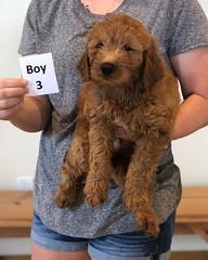 Bailey Boy 3 10-23