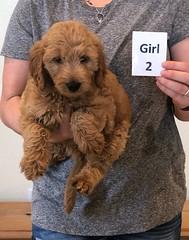 Bailey Girl 2 10-23