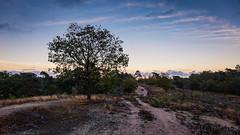 Sunset @ Maasduinen National Park
