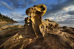 'Petrified Rex' Gulf Islands,BC