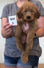 Bailey Girl 1 pic 2 10-23
