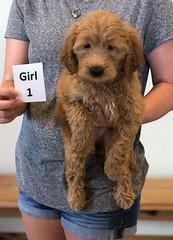 Bailey Girl 1 10-23