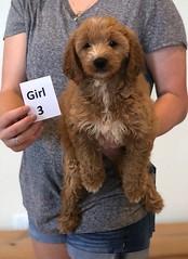Bailey Girl 3 pic 4 10-23