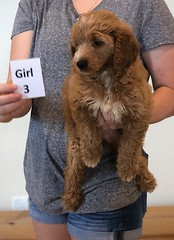 Bailey Girl 3 10-23