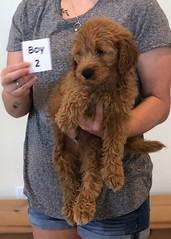 Bailey Boy 2 pic 2 10-23