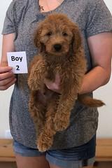 Bailey Boy 2 10-23