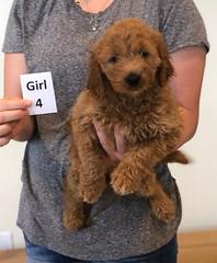 Bailey Girl 4 pic 3 10-23