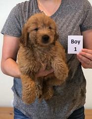 Bailey Boy 1 pic 2 10-23