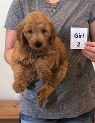 Bailey Girl 2 pic 2 10-23