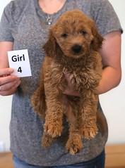 Bailey Girl 4 10-23