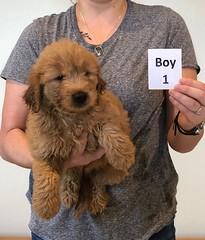 Bailey Boy 1 10-23