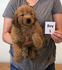 Bailey Boy 1 pic 4 10-23