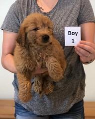 Bailey Boy 1 pic 3 10-23