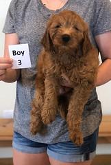 Bailey Boy 3 pic 2 10-23