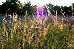 Light Thru Grass
