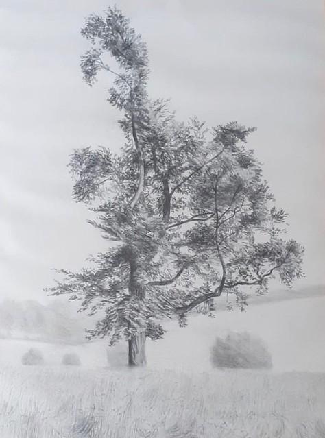 Reid Geoff, 'Tree'