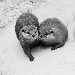Photo of Otterly adore you