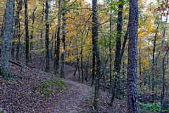 A Path Forward to Explore in the Forest and Mountains of Hot Springs National Park