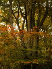 Photo of Epping Forest in Autumn