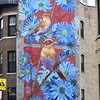 Nelson's Sparrows in Blue Aster Flowers by Steven Teller, Uptown Chicago