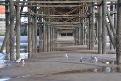 Photo of Under the pier at Blackpool