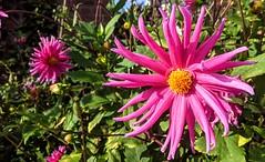 Photo of Bright Summer flower