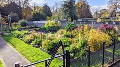 Photo of Ashton Park�s Lets Grow gardens