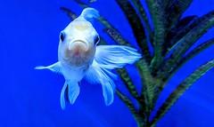 Photo of Something fishy?