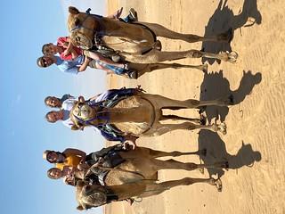 Hawkins camels