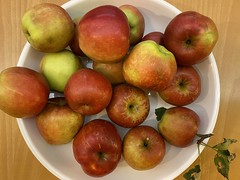 Photo of Allotment apples