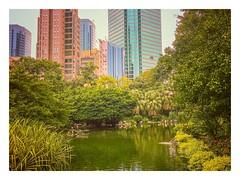 Flamingo- Kowloon Park, Hong Kong, 香港