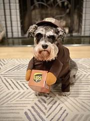 Halloween Pet Costume Contest 2020