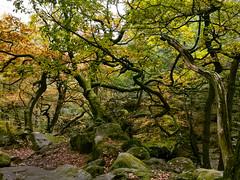 Padley Gorge, Derbyshire Dales District, England
