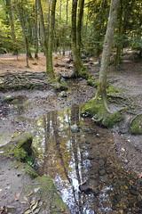 Ruisseau des Fées @ Bois des Glaisins @ Annecy-le-Vieux