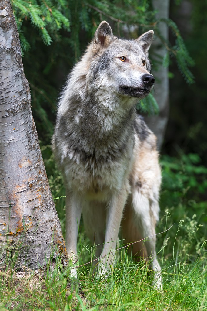 Masked Wolf images