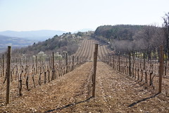 Winegrowing in Central Serbia